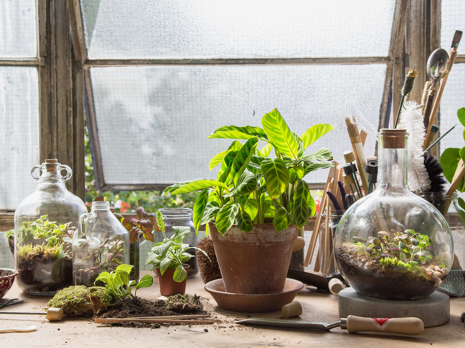 Creating Gardens Of Eden A Talk With London Terrariums New